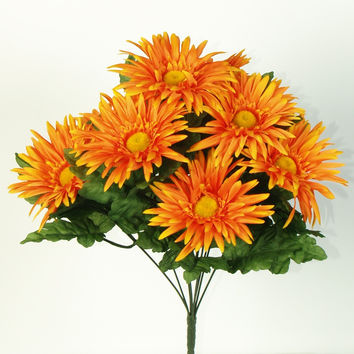 Gerbera Daisy Bush - Orange  BLOW OUT SALE !!