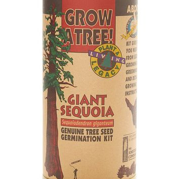 The Jonsteen Company Giant Sequoia Grow Kit - Set of Two