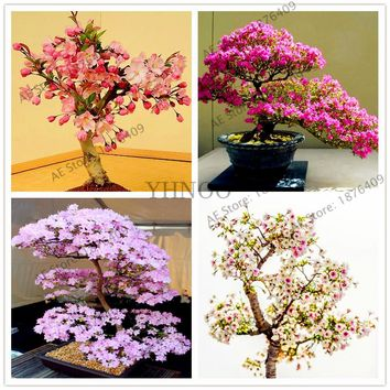 10pcs/bag Japanese Sakura seeds,cherry blossoms seeds,ornamental-plant for outdoor indoor bonsai tree Seeds