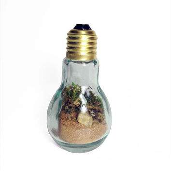 Recycled Light bulb Terrarium