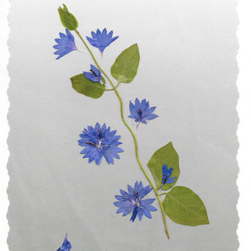 Real Pressed Flower Greeting Card, Birthday Card, Thank You Card, Note Card