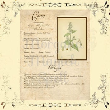 MAGICK HERB CATNIP, Digital Download,  Book of Shadows Page, Grimoire, Scrapbook, Spells, White Magick, Wicca, Witchcraft, Herb Magic