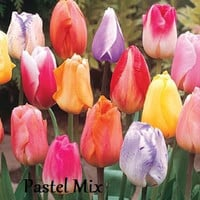 Seeds High Quality Tulip Perennial Flower Seeds You Pick The Color, Tulip Seeds