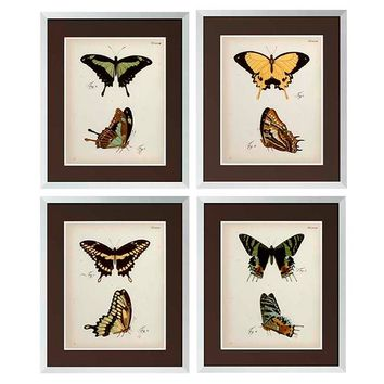 Eichholtz Butterfly Print (set of 4)