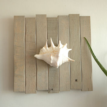 Beach Décor: Lambis Seashell Wall Art on Sunbleached Drift Wood