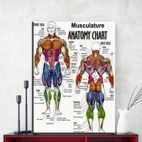 ZZ1855 human musculature anatomy poster print Picture Canvas painting Anatomy medical wall art Home Decoration Wall hanging gift