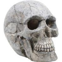 Bio Bubble Pets Llc - Human Skull Aquarium Ornament