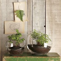 Open-Face Terrariums | west elm