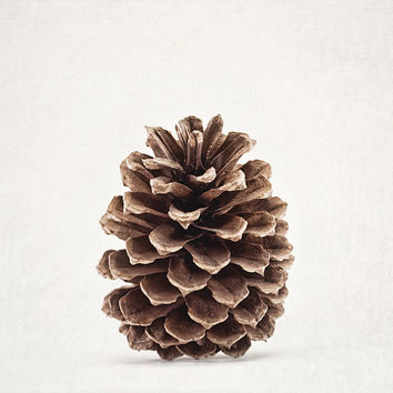 Pinecone Canvas Gallery Wrap, Nature Photography, Wall Art, Gray, Brown, Rustic, Minimalist - 'Pinecone Pose'