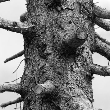 Nature photography, A tree stump black and white photography instant download, wall home decore, pattern print, downloadable macro photo