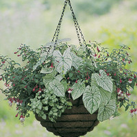 Very Large Baskets - 24 HANGING BASKET-EURO CLASSIC