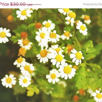 SPRING SALE Daisies Print, 8x10 Photography Print, Nature, White & Yellow Flowers, Dreamy Whimsical Print, Nursery Decor, Wall Art, Home De