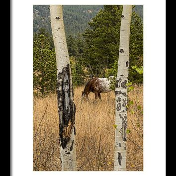 Beautiful Horse Through The Aspen Trees Portrait Framed Print