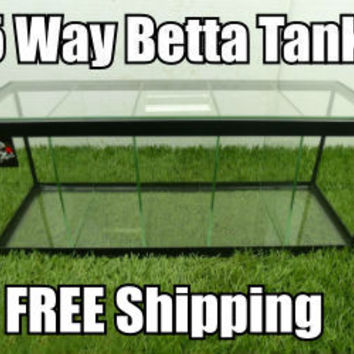 Betta Divided Tank for Sale - 5 Way w/ Divider and Top Glass Canopy Free Shipping - BettaFishforSale.org