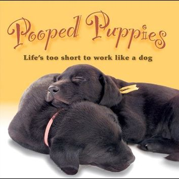 Pooped Puppies Book, Cute Puppies by Sellers Publishing Inc