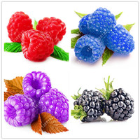 1000pcs rare raspberry seeds organic fruit seeds green red blue purple black raspberry seeds for home garden plant easy to grow