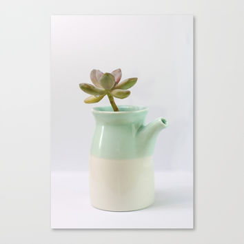 Succulent in tea pot by Shashira Handmaker