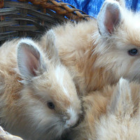 Save the bunnies!