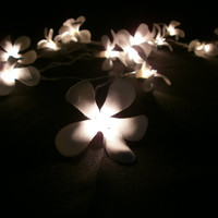 White Frangipani Flower Hanging string lights for party and home decoration indoor and outdoor (20 Flowers/pack)