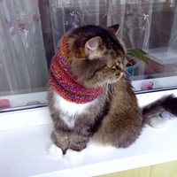 Pets clothes  Snood  Scarf for puppy  Neck Warmer for  Medium Dog Cat Hand Knitted READY TO SHIP