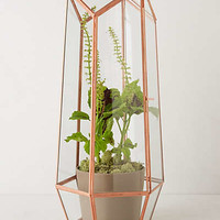 Anthropologie - Faceted Terrarium