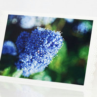 Blank Greeting Cards Set Blue Flower Photo by SeeWorldThruMyEyes