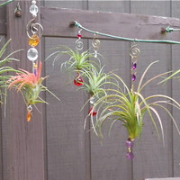 Air Plant Hanging Window Ornaments- Assorted 3 pack - Unique Gift Spring Birthday Gift For Mom Gifts under 50