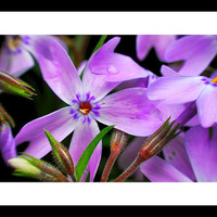 A Day In The Garden by FairchildPhotography on Etsy