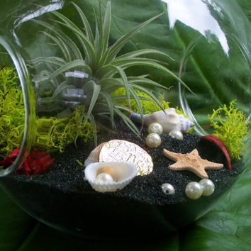 Air Plant Terrarium on Black Beach with Pearls