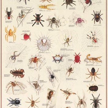 Arachnids Spiders Insect Education Poster 27x39