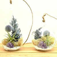 Bliss Gardens Air Plant Terrarium Kit  / Purple Amethyst Crystal / Shabby Country Chic