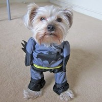 Amazon.com: Alfie Couture Pet Apparel - Superhero Costume Batman - Size: S: Pet Supplies
