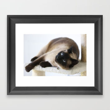 Sulley, A Siamese Cat Framed Art Print by Theresa Campbell D'August Art