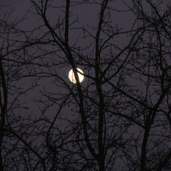 Full Moon Photography...Wall Art ..Home Decor by Trish Helsel Photography