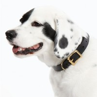 "the stowe exclusive 1"" dog collar"
