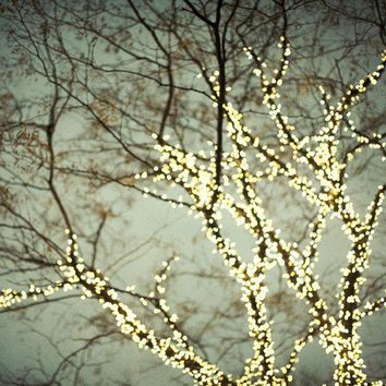 Tree Photograph Winter Magical Christmas Lights by irenesuchocki