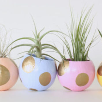 Mini Air Plant Planter Set of Six with Plants. Easter Table Setting. Pastels & Gold Spots. Spring Decorations. Baby Shower. Hostess Gift.
