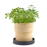 Organic Oregano Bamboo Grow Pot | bambeco