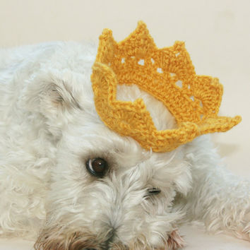 Dog crown gold crochet Puppies first pictures Photo Prop. Great for cats too