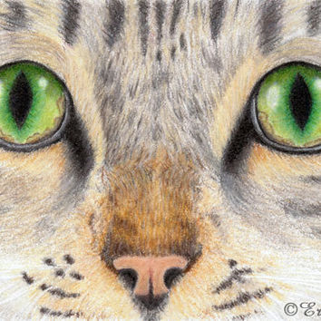 Tabby Cat Print Green Cat Eyes ACEO Print  from by NatureVisions