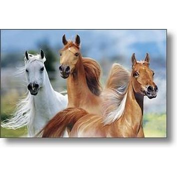 WILD HORSES POSTER 24X36 Poster Print by Bob Langrish, 36x24