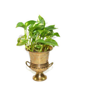 Vintage Brass Ice Bucket Small Brass Ice Bucket Brass Planter Mini Champagne Bucket Brass Vase Brass Container