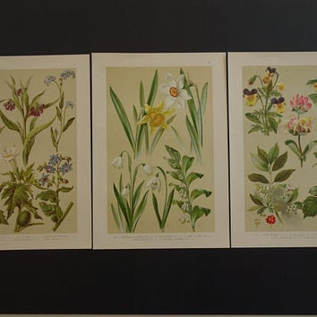 Old botanical print set of three 3 matching original 1918 vintage floral poster flower prints flowers affiche botanique  print 19x28c 8x11""
