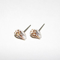 Natural shell stud earrings