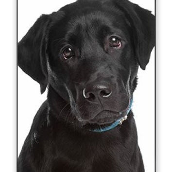 Adorable Cute & Sad Black Labrador Retriever Puppy Dog iPhone 4 Quality Hard Snap On Case for iPhone 4 4S 4G - AT&T Sprint Verizon - White Case Cover