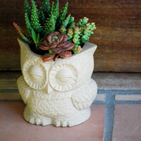 owl planter natural