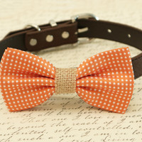 Orange Dog Bow Tie, Burlap bow tie, Bow tie attached to brown collar, Country Rustic wedding, Burlap wedding, pet wedding accessory