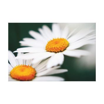 Two pretty daisies. canvas print