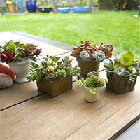 Sedum Cuttings for Miniature Garden Containers, Fairy or Gnome Garden Pots