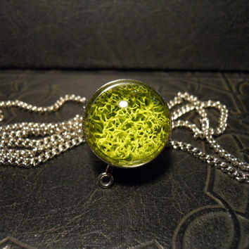 Green Nature Ball Moss Terrarium Orb Silver Metal LONG Necklace